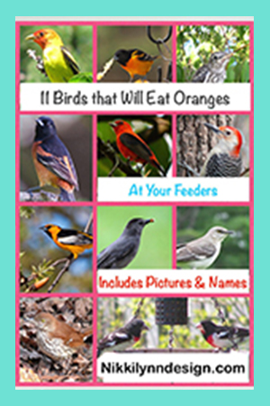 11 Birds That Will Eat Oranges at Your Bird Feeder