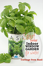 Grow Basil From Cutting