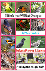 Birds that will eat oranges