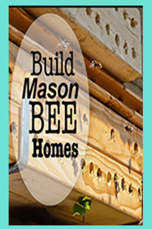 Build Mason Bee Homes