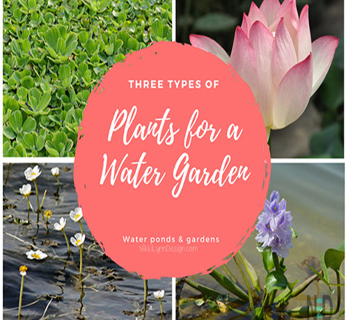 Different Types of Plants for a Water Garden