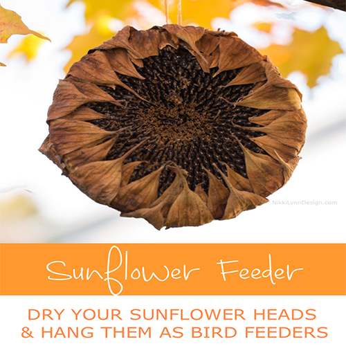 Sunflower Head Bird Feeders
