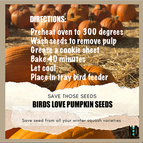 Drying Pumpkin Seeds For Birds