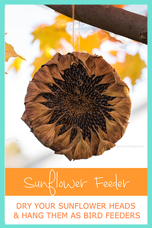 How to Dry Sunflower Heads for a Sunflower Seed Feeder