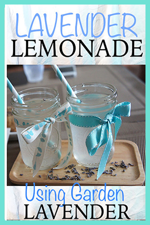 Lavender Lemonade Using Garden Lavender