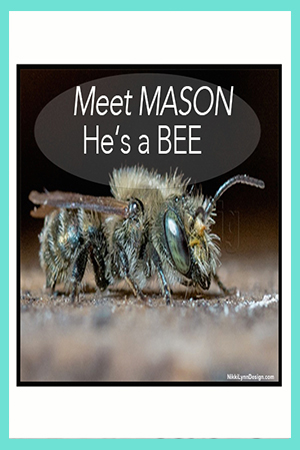 What is a Mason Bee