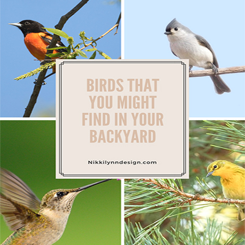 Birds You May Find in Your Backyard