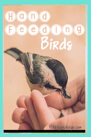 Hand Feeding Birds