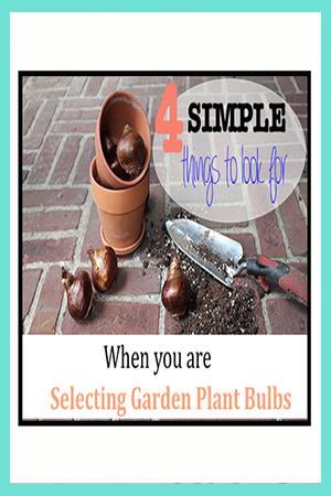 How to Buy Garden Plant Bulbs