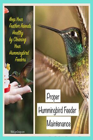 How to Clean a Hummingbird Feeder