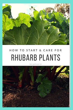 How to Start and Care for Rhubarb Plants