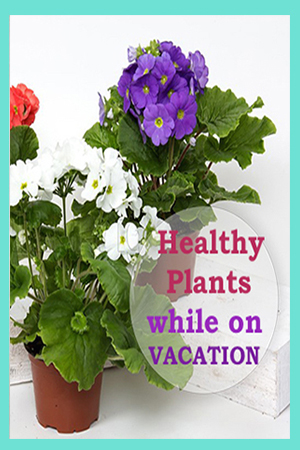 How to Water Plants When on Vacation