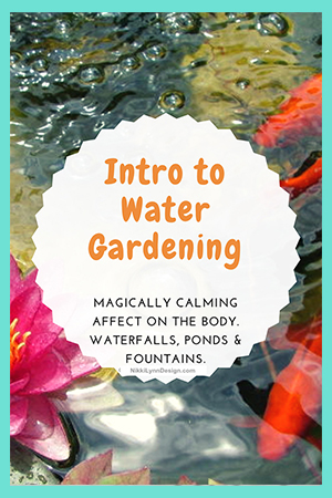 Introduction to Making a Water Garden
