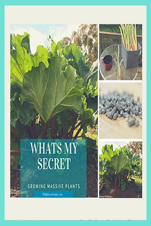 Secret to Growing Massive Healthy Garden Plants