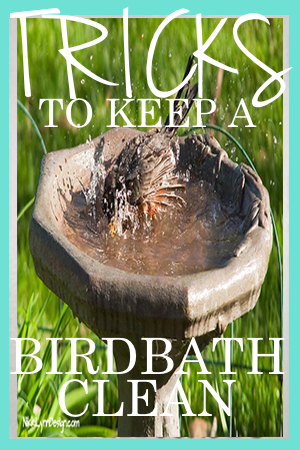 3 Tricks to Keep Your Bird Bath clean