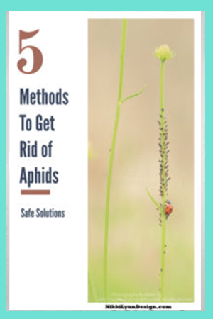 Ways to Get Rid of Aphids