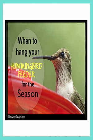 When do the Hummingbirds Return for Season and When to Hang Feeder