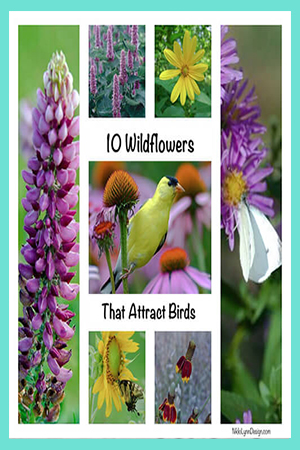 Wildflower that birds like