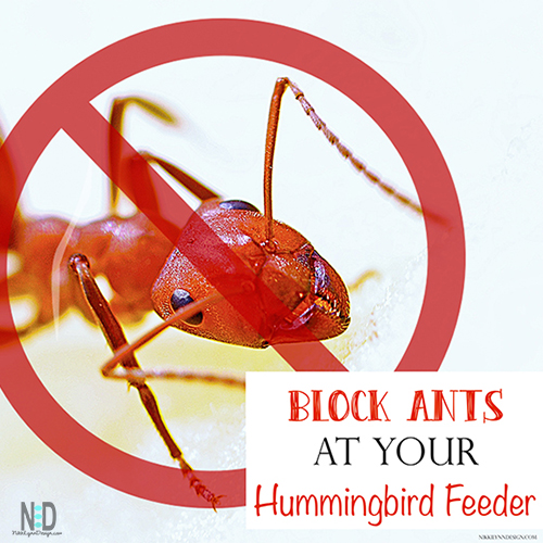 Keep Ants Out of Hummingbird Feeder