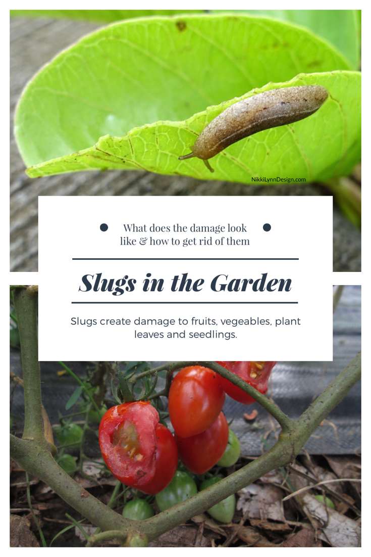 Garden Pests Archives Nikki Lynn Design
