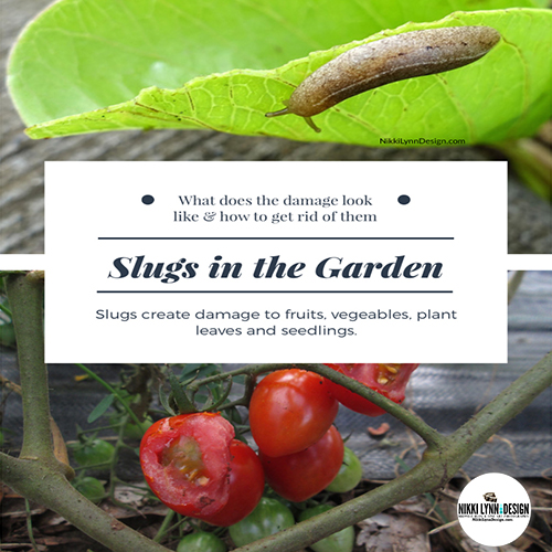 Slugs in the Garden