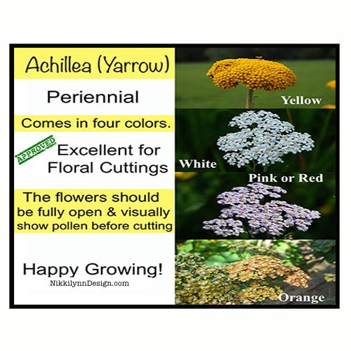Achillea-Yarrow