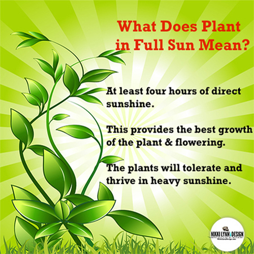 What Does Plant in Full Sun Mean