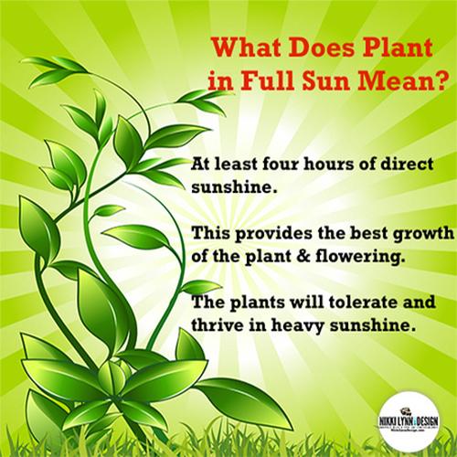 Plant In Full Sun Nikki Lynn Design