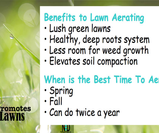 Fall Lawn Aerating Promotes Greener Lawns- How, when and why to aerate a lawn.