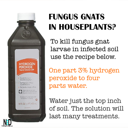 Fungus Gnat Indoor Houseplant Recipe