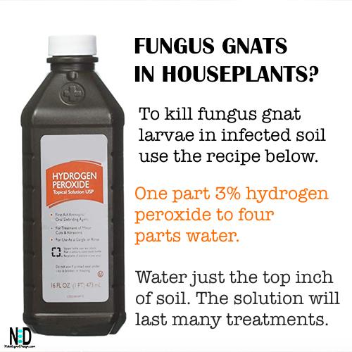 Fungus Gnat Indoor Houseplant Recipe
