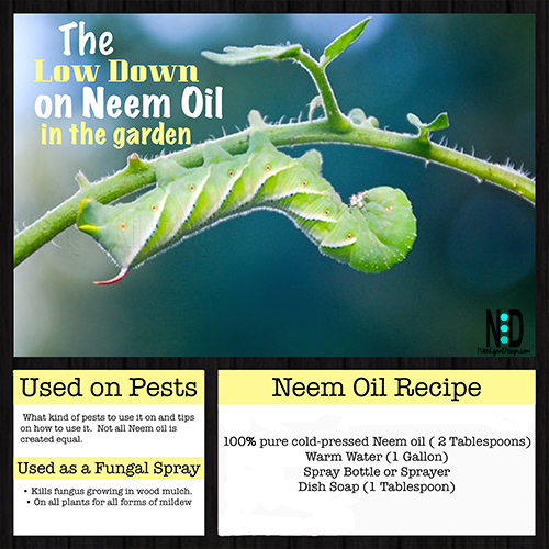 Low Down on Neem Oil For Plants