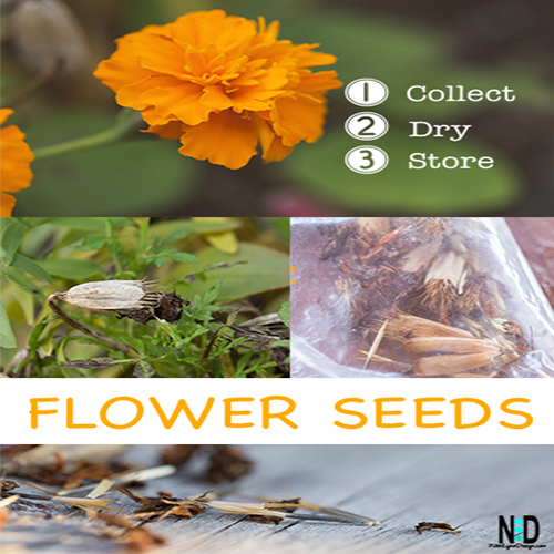 Saving Flower Seed: Collect, Dry and Store
