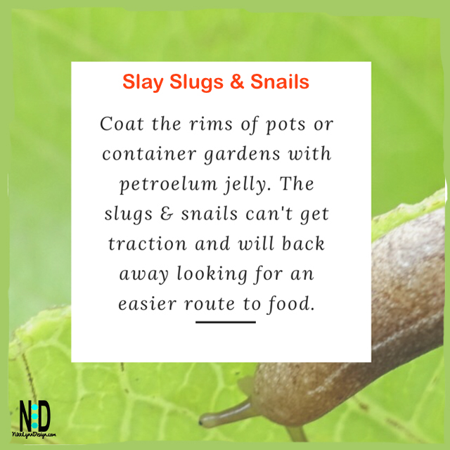 Slay Slugs and Snails