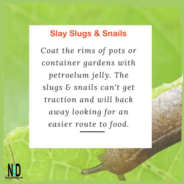 Slay Slugs and Snails