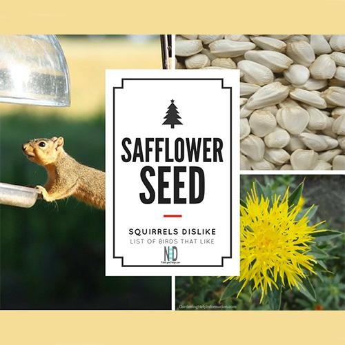 Birds Like Safflower Seed Squirrels Dislike