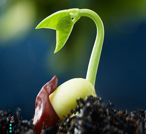 Testing Seed Germination