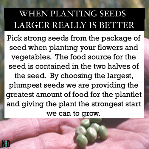 How long does it take seeds to germinate ? There is a way to know when this will occur fairly easily by testing seed germination and how long it take seeds to germinate. Having the exact knowledge of when a seed will germinate is important for a variety of reasons, the most important reasons are to save you time, energy and money.