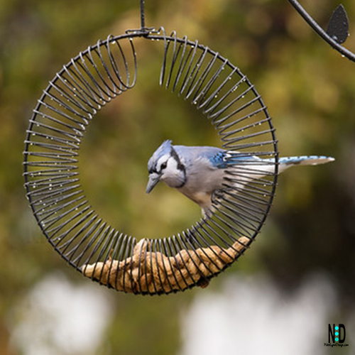 Blue Jays and Peanuts