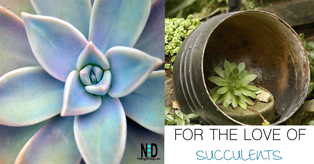 For the Love of Succulents - Succulent Container Planting Ideas