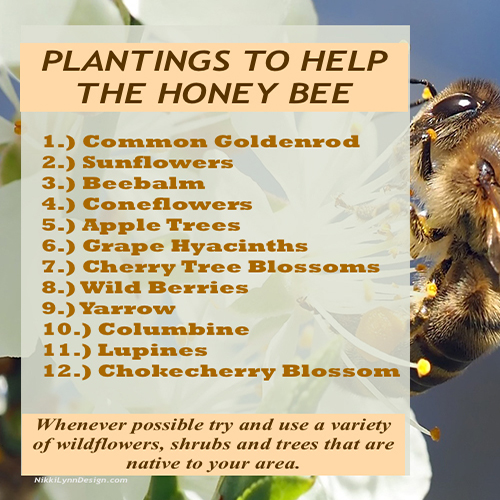 Want to help out the declining honey bee population? I have put together a list of 3 things gardeners can do to help the declining honey bee population.