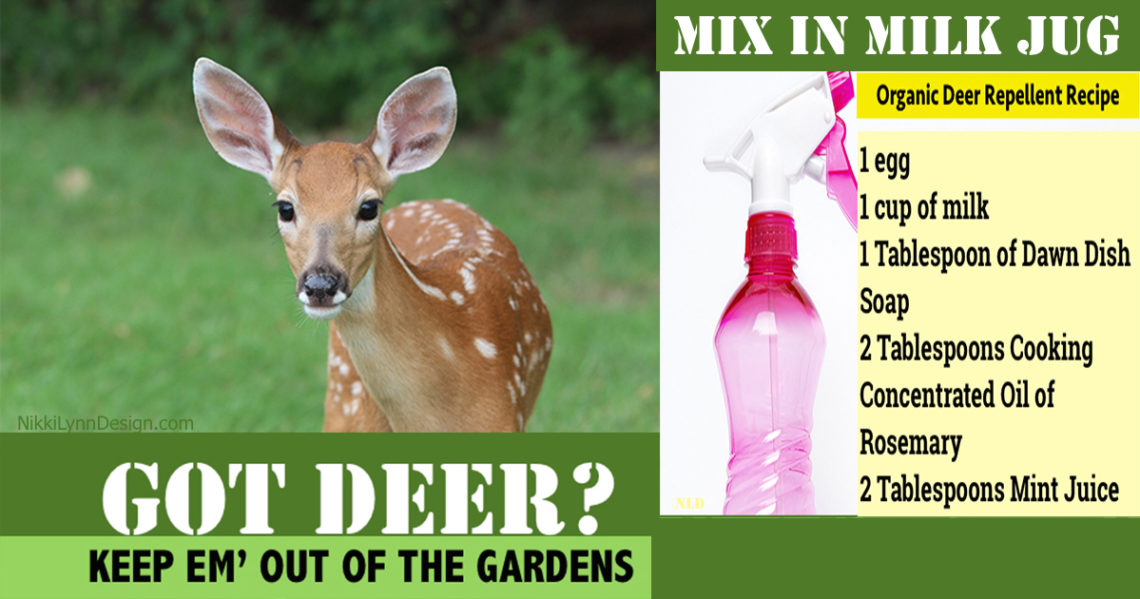 How to keep deer from eating flowers and garden plants