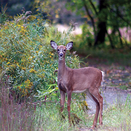 Keep Deer Out of the Garden