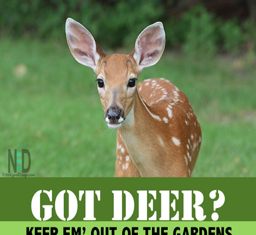 Got Deer? Keep Em' Out Of Your Gardens