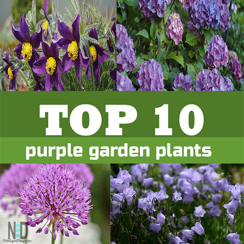Top 10 Purple Plants to Plant in The Flower Garden