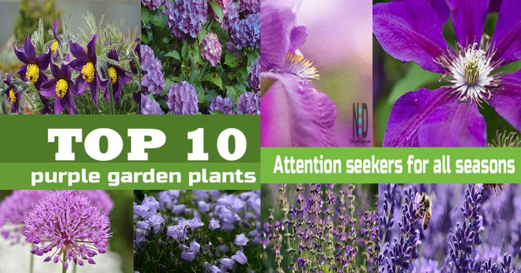Top Purple Flowers