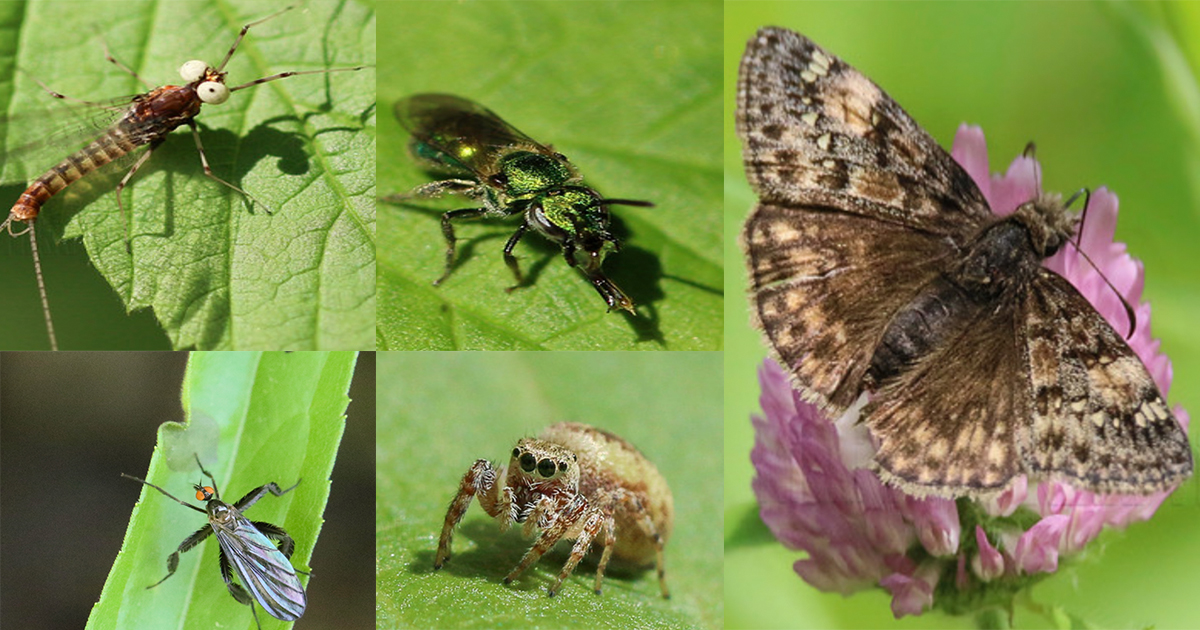 July is for Bugs and Butterflies - Assortment of bugs and butterfly macros that were taken during the month of July