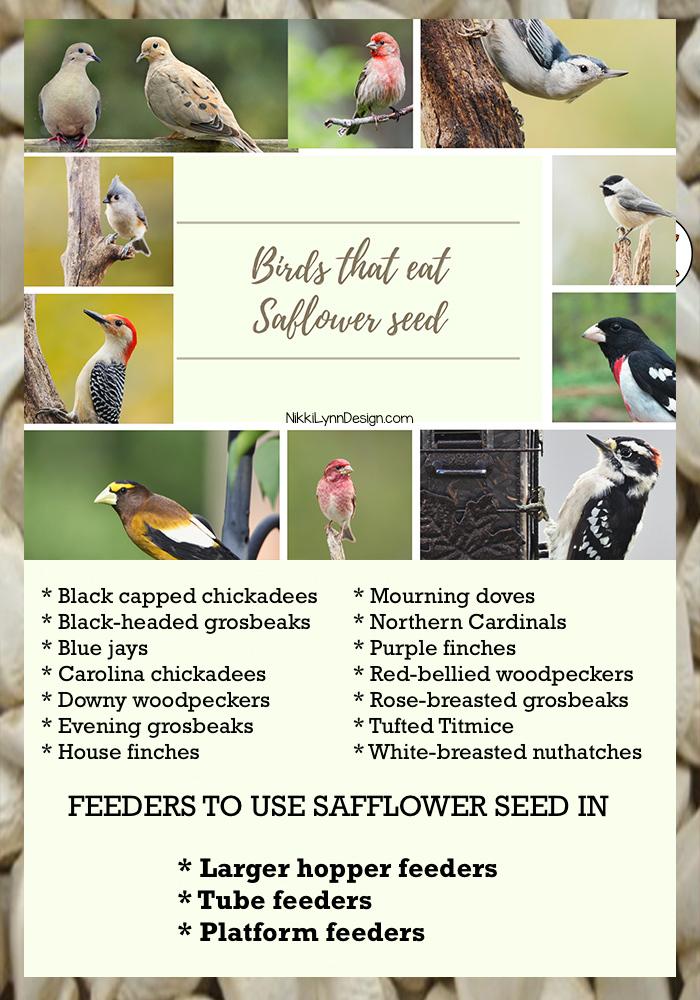 Birds that eat safflower seeds