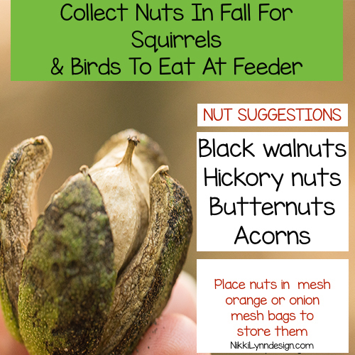 Collect nuts in fall and store in mesh orange and onion bags to put in feeder year round for squirrels and birds.