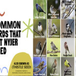 Birds That Eat Nyjer Thistle Seed